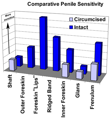 Penile Sensitivity Chart. Data provided by Sorrells, et. al.